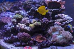 盐水珊瑚礁 免版税库存照片
