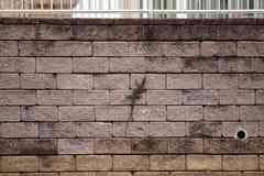 监控蜥蜴在墙壁上走在亚洲城市 免版税图库摄影