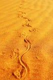 监控蜥蜴轨道在沙子,弗朗索瓦庇隆国家公园的 免版税库存照片
