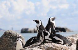 监视企鹅 免版税库存图片