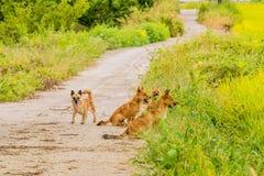 盒在小车行道的四条棕色狗 免版税库存照片