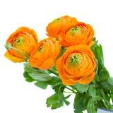 盒橙色毛茛属花 库存照片
