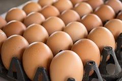盒鸡蛋 免版税图库摄影