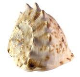 盔甲查出的壳蜗牛 库存图片