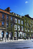 盖一个大厦的门面的在都伯林市centr的绿色常春藤 免版税库存照片