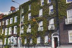 盖一个大厦的门面的在都伯林市centr的绿色常春藤 库存照片