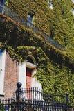 盖一个大厦的门面的在都伯林市centr的绿色常春藤 图库摄影