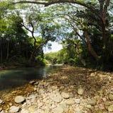 盖一条小河的树机盖在密林 免版税图库摄影