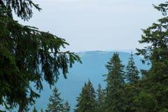 盖喀尔巴阡山脉的常青森林 图库摄影