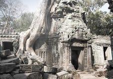盖寺庙废墟的石头的密林树在吴哥窟暹粒,柬埔寨, 12世纪,减速火箭的作用 库存照片