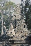 盖寺庙废墟的石头的密林树在吴哥窟暹粒,柬埔寨, 12世纪,定调子 库存照片