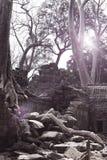 盖寺庙废墟的石头的密林树在吴哥窟暹粒,柬埔寨, 12世纪,定调子 免版税库存照片