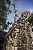盖寺庙废墟的石头的密林树在吴哥窟暹粒,柬埔寨, 12世纪 免版税库存图片