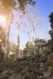 盖寺庙废墟的石头的密林树在吴哥窟暹粒,柬埔寨, 12世纪 库存照片
