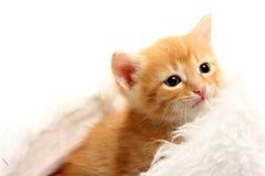 盖帽圣诞节小猫红色小 免版税库存图片