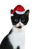 盖帽小猫s圣诞老人 免版税库存照片