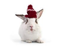 盖帽花梢被编织的兔子白色 免版税库存照片
