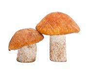 盖帽采蘑菇桔子 免版税库存图片