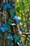 盖树的植物 库存照片