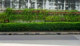 盖跨线桥墙壁的绿色藤在雅加达拍的路照片的边印度尼西亚 免版税库存照片