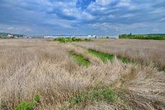 盖水池的芦苇海从Someseni浴保持在科鲁附近 免版税库存照片