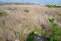 盖水池的里德从Someseni浴保持在科鲁附近 免版税图库摄影