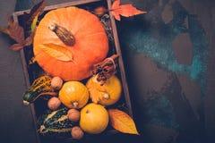 盘子以装饰南瓜品种  秋天、感恩或者万圣夜概念,拷贝空间 免版税图库摄影