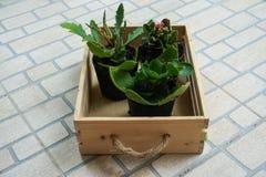 盘子的植物 库存照片