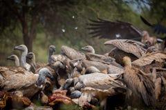 盘旋在thr死亡的仅尘土和羽毛 免版税库存照片