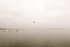 盘旋的海鸥上面 免版税库存照片