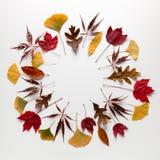 盘旋秋叶框架在白色背景的与拷贝spac 图库摄影