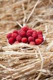 盘莓 库存图片