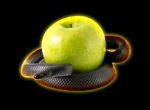 盘绕在一个绿色苹果附近的黑诱惑蛇 库存照片