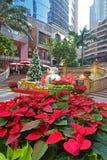 盛大千年广场的香港一品红植物 库存照片