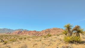 盛大圈子,红色岩石峡谷全国保护地区, NV 库存图片
