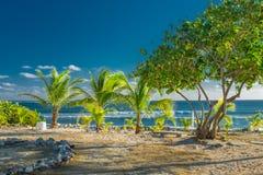 盛大大鳄鱼社区海滩 库存图片