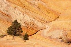 盛大楼梯埃斯卡兰蒂国家历史文物,犹他,美国 免版税库存图片