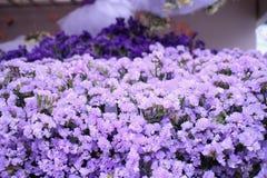 盛大紫色淡紫色 库存图片