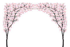 盛开桃红色佐仓树曲拱樱花曲线在白色隔绝的黑色木头 库存照片