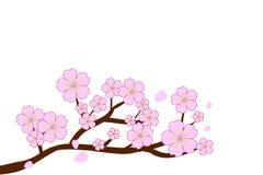 盛开樱花和吹/在白色背景隔绝的飞行瓣 也corel凹道例证向量 免版税图库摄影