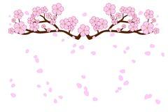 盛开樱花和吹/在白色背景隔绝的飞行瓣 在平的设计的传染媒介例证 库存照片