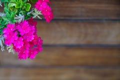 盛开深桃红色的紫色洋红色野花和绿色叶子前景在被弄脏的木木材板条拷贝空间背景 库存照片