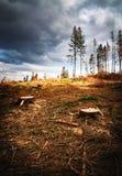 盛开的森林的看法在灾难以后的 免版税库存图片