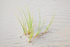 盛开的深度沙丘领域重点草沙子浅风 免版税库存照片