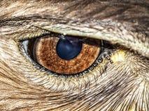 目光敏锐 图库摄影