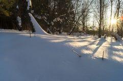 盲目的阳光在密集的木头的一个冷淡的晴朗的冬天晚上 图库摄影