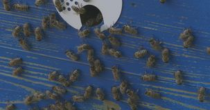 直接蜂和蜂房 股票视频