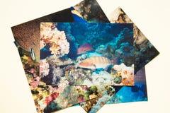 相册remembtance和乡情旅途在夏天潜水 由我自己的射击 免版税库存照片
