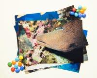 相册remembtance和乡情旅途在夏天潜水 由我自己的射击 库存照片