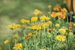 相当五颜六色的花在充分的春天开花与蝴蝶 免版税库存照片